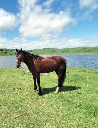 Лошадь на озере
