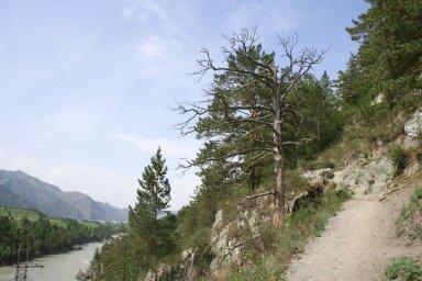 Тропа вдоль Катуни